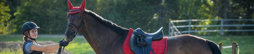 pferd schutz gurt
